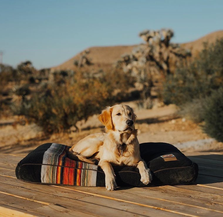 Pendleton Pet Collection brand shot